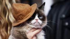 Audio «Katzen im Internet lassen die Kassen klingeln» abspielen