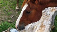 Audio ««Bonjour les Romands»: Jean-Pierre Rochat - Pferde» abspielen