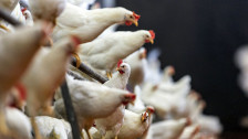 Audio «Schwieriger Kampf gegen Antibiotika-Resistenz» abspielen