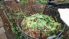 Audio «Zu viele Nahrungsmittel im Abfall» abspielen
