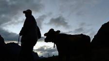 Audio «Starke Schweizer Bauernlobby» abspielen