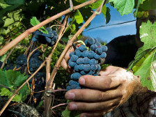 Audio «Massnahmen gegen Weinpanscherei im Wallis» abspielen