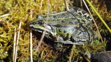 Audio ««Amphibien reagieren empfindlich auf Pestizide»» abspielen