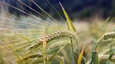 Audio «Rhetorischer Bauernkrieg zur Ernährungssicherheit» abspielen