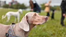 Audio «Ständerat will obligatorische Hundekurse abschaffen» abspielen