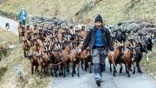 Audio «Ziegen- und Schafmilch wird immer beliebter» abspielen