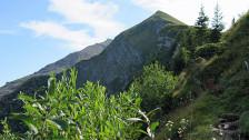 Audio «Der Bannwald klettert mit der Waldgrenze in die Höhe» abspielen