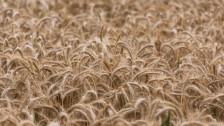 Audio «Teure Schweizer Rohstoffe als Exportprodukte» abspielen