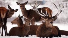 Audio «Tiere sollen in der Winterruhe nicht gestört werden» abspielen