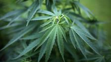 Audio «Kein Cannabisverkauf zu Studienzwecken» abspielen