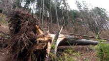 Audio ««Winterstürme sind kein Zeichen des Klimawandels»» abspielen