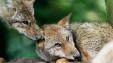 Audio «Jagdgesetz für Jäger und gegen Tiere» abspielen