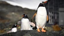 Audio ««Die Reise in die Antarktis war ein Traum»» abspielen