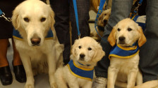 Audio «Bachblüten gegen Hundeangst» abspielen