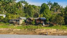 Audio «Ohne Palmen geht im ecuadorianischen Regenwald nicht viel» abspielen