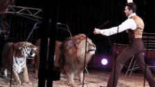 Audio «Historische Berufe: Katzenritter» abspielen