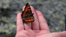 Audio «Schmetterling» abspielen