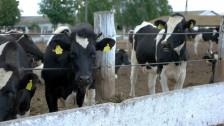 Audio «Der Kuhhandel war spannend» abspielen