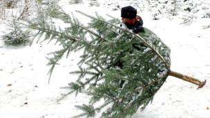 Laschar ir audio «La cifra – 1,2 milliuns pignols da Nadal».