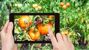 Audio «Gärtnern mit digitalen Hilfsmitteln» abspielen.