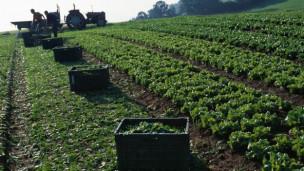 Audio «Garten planen: Tipps zur Fruchtfolge» abspielen.