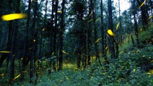 Audio «Gärten für Leuchtkäfer» abspielen.
