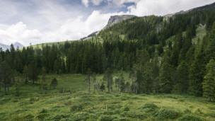 Audio «Moor-Landschaften – schön, urtümlich und faszinierend!» abspielen.