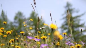 Audio «Ein naturnaher Garten braucht kein Wasser» abspielen.