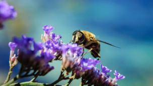 Audio ««Bienen schwärmen für sie» von Maria Ursprung» abspielen.