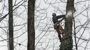 Audio «Streit um Bäume in der Stadt - in der Romandie und im Tessin» abspielen.