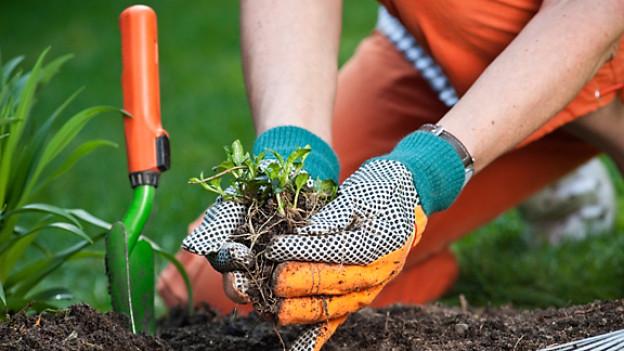 Handschuhe schützen bei der Gartenarbeit vor Hautverletzungen.