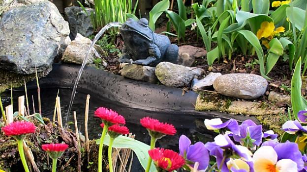 Beliebt: Gewässer im Garten.