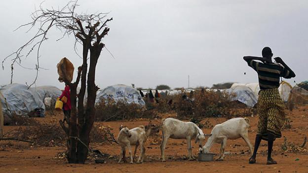 Ein Somalier mit seinen Ziegen im Flüchtlingscamp von Dadaab im Osten von Kenia.