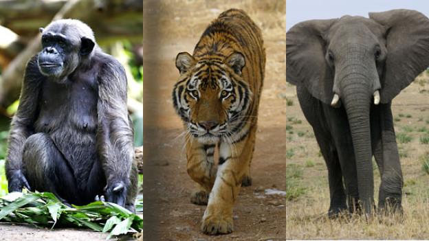 Soll man die Haltung exotischer Tiere in der Schweiz verbieten?