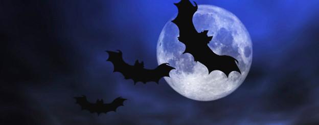 Man erzählt, dass sich Vampire in Fledermäuse verwandeln, damit sie sich unauffällig fortbewegen können.