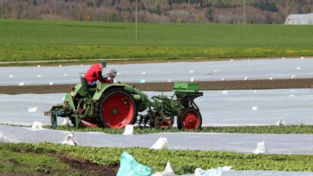 Tomaten, Salate, Gurken, Spargeln und vieles mehr: 2500 Anbaubetriebe versorgen die Schweizer Bevölkerung mit frischem Gemüse.