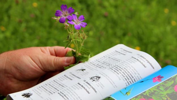 Die Pflanzenwelt ist riesig: Gegen eine halbe Million Arten werden unterschieden.