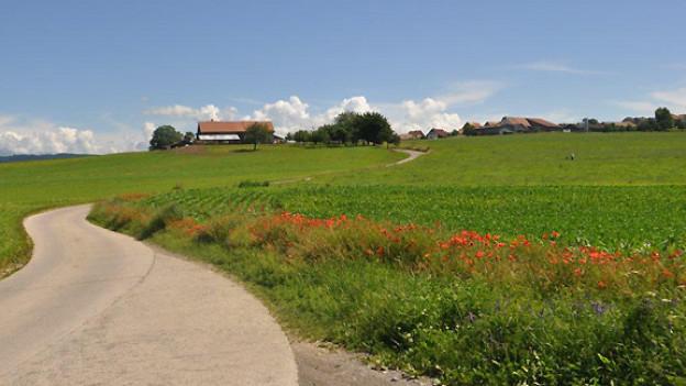 Mit dem Fahrrad unterwegs auf der «Herzroute», kurz vor Villarimboud (FR).