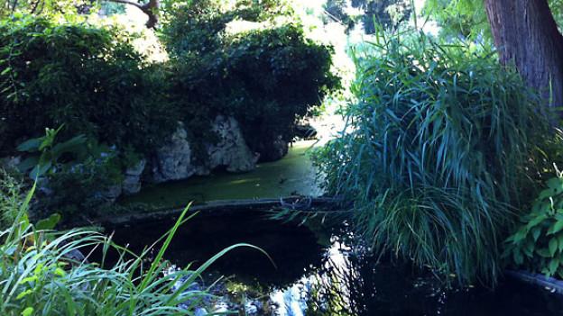 Morgenstimmung im Botanischen Garten Basel.