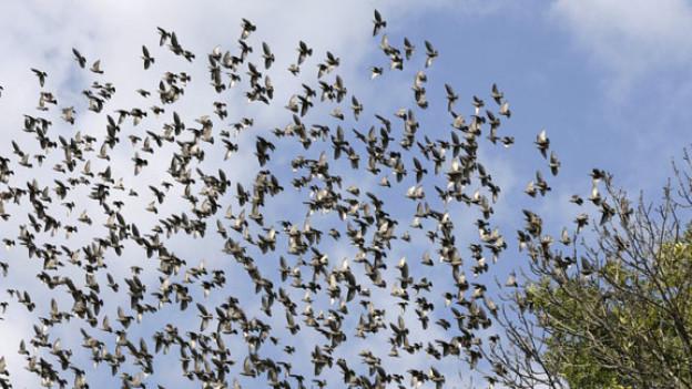 Ein Schwarm Zugvögel