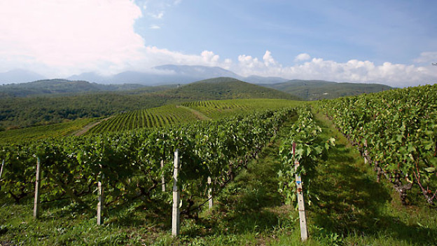 Xinomavro-Rebberge des Weinguts Kir-Yanni in Naoussa.