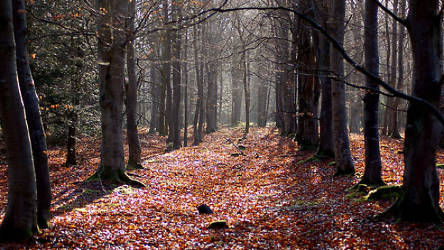 Der Wald ist für alle frei zugänglich.