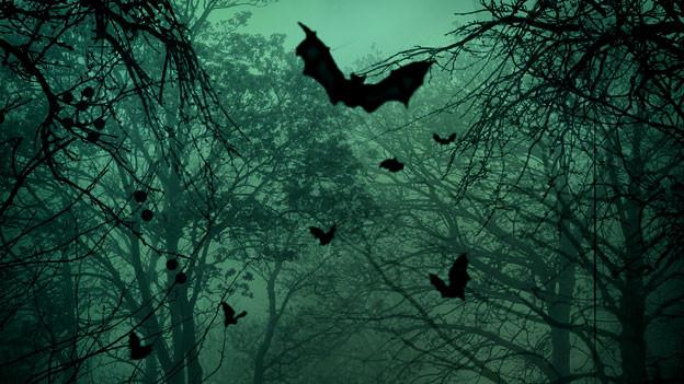 Viele Menschen finden Fledermäuse zum Gruseln.