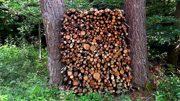 Fast zu schade für den Gebrauch: Holzbeige zwischen zwei Bäumen.