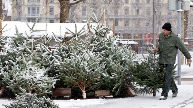 Verschneiter Christbaum-Verkauf auf dem Zürcher Bürkliplatz.