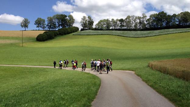 Allein auf weiter Flur: Die «Querfeldeins»-Wandergruppe auf dem Jakobsweg Richtung Willisau.