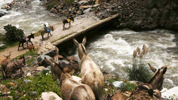 Da Esel wasserscheu sind baute man Eselsbrücken - zum «einfachen Überwinden von Hindernissen»