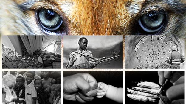 Der Wolf, Haiti, Kinder im Krieg, der Gotthard-Durchstich, internationale Adoptionen, jugendliche Schläger und ein Drogenkönig. Sieben Geschichten, die dieses Jahr bewegt haben.