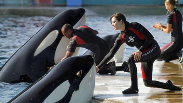 Hier ist die Welt noch in Ordnung: Stéphanie (Marion Cotillard) arbeitet im Aquapark von Antibes mit Orcas.