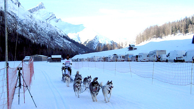 Die Huskies im Ziel in Splügen.